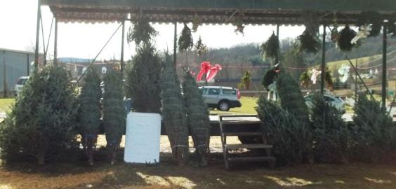 ChristmasTree Fundraiser